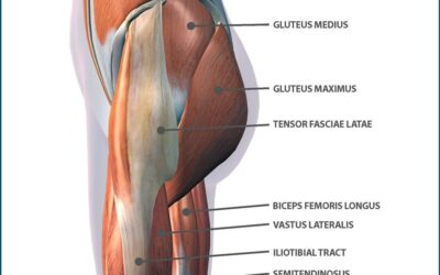 Function of the Glutes